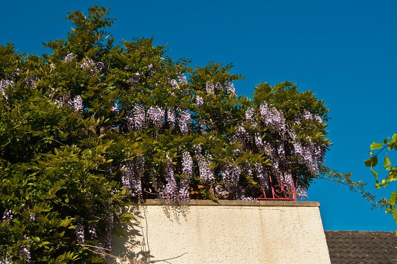 2010-May-22-Garden-1