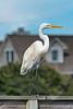 Georgetown_Wildlife_5481