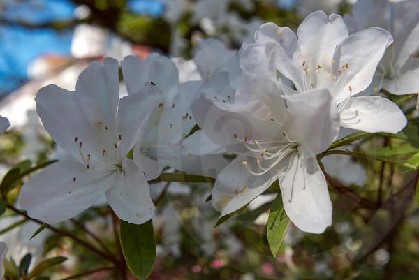 Georgetown_Flowers_7354
