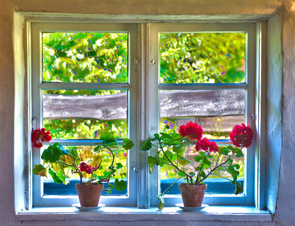 Window with geranium #1<br /> Gross Zicker, Germany<br /> <br /> P312