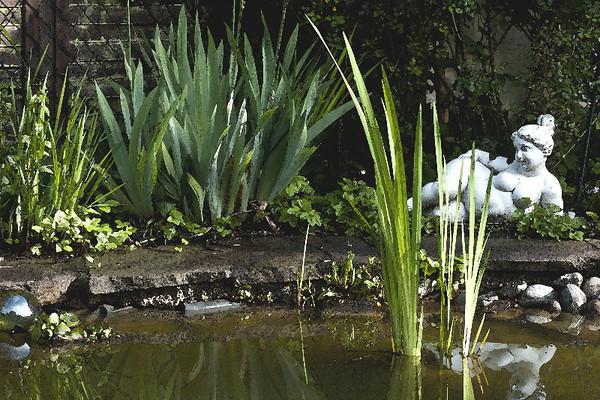 Gabi's pond<br /> Furstenfeldbrück, Germany<br /> <br /> P327