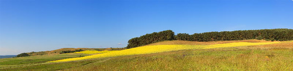 Rape-seed field<br /> Gross Zicker, Germany<br /> <br /> P357