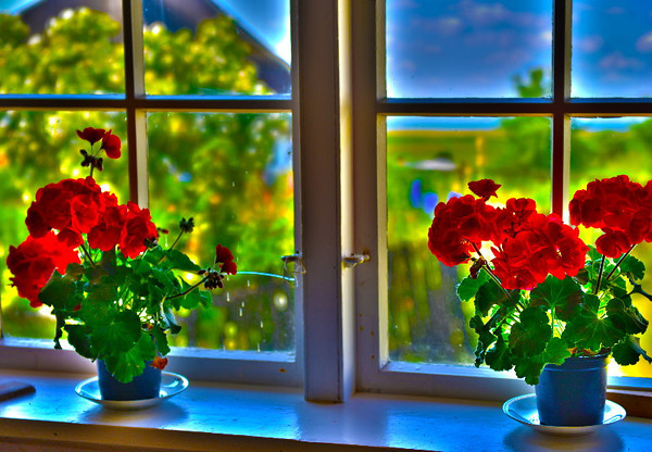 Window with geranium #2<br /> Gross Zicker, Germany<br /> <br /> P313