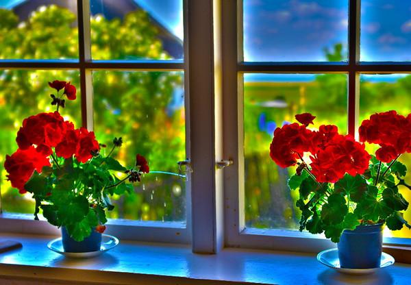 Window with geranium #2<br /> Gross Zicker, Germany<br /> <br /> P313