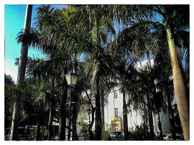Delhi, India, Feb 2013 -     Palm trees seen inside the hotel Imperial  compound in the centre of New Delhi.    Images for the Global Post's special report -   The Great Divide:  Global income inequality and its cost    Photograph:  Sami SIVA