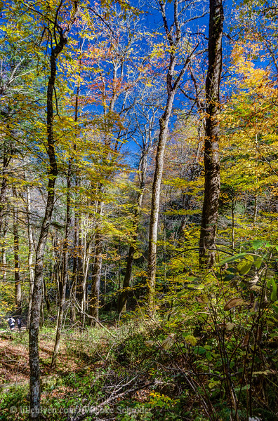 Chimney Tops Trail, Great Smoky Mountains National Park (HDR)