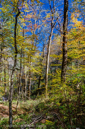 Chimney Tops Trail, Great Smoky Mountains National Park