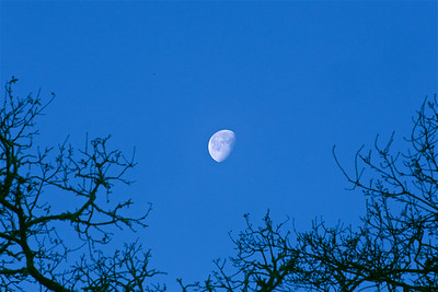 PF-190125-0002 Moon above the trees #1