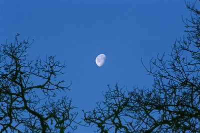 PF-190125-0003 Moon above the trees #2
