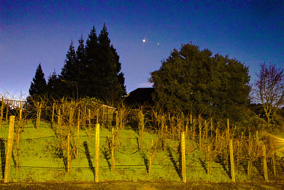 PF-190124-0001 A street light provides the lighting of the vineyard on this early morning shot