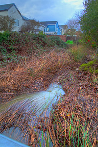 PF-190204-0003 Heavy water flow mats down the grass in the creek #2