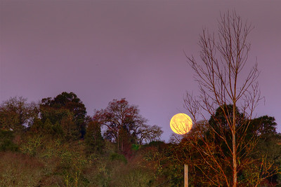 PF-190219-0001 A setting moon settling behind the trees