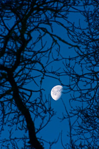 PF-190125-0001 Moon through the tree