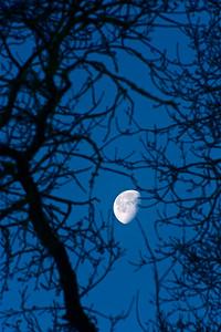 PF-190125-0001 Moon through the tree