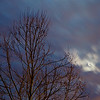 PF-180312-0001<br /> Tree, Moon and Clouds in Predawn Light