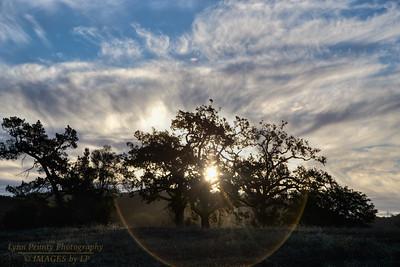 PF-130825-0001 Sunrise
