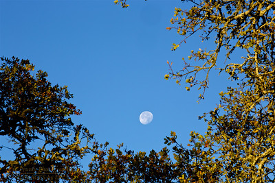 PF/HROS-141109-0002 Healdsburg Ridge Open Space the Moon