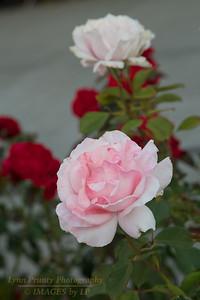 PF-130823-0001 Flowers