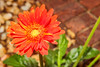 Cleveland_Flowers_9257