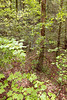 Helen_Smithgall Woods Dover Cabin_4719