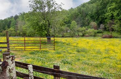 White County Georgia