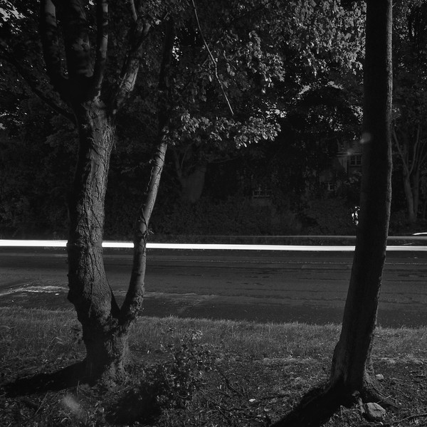 A car just passing by some trees