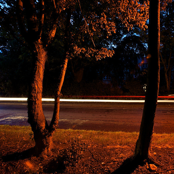 Trees light by an orange street lamp with car trails passing by
