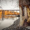 Ice damaged trees and the collapsed west span of the Wagon Wheel Bridge