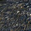 Särkipuro- Roach brook- Mörtbäck