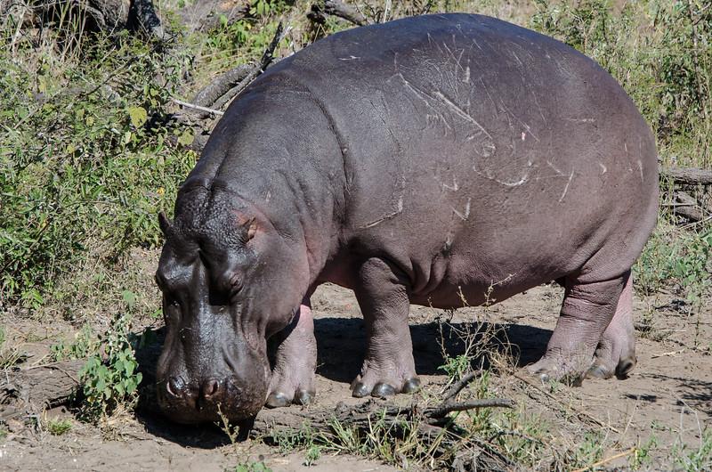 Autumn 19 Hippo