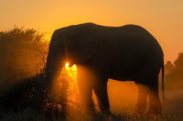 Kruger National Park 2013