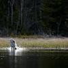 Kurki kalastaa- Trana fiskar- Crane fishing