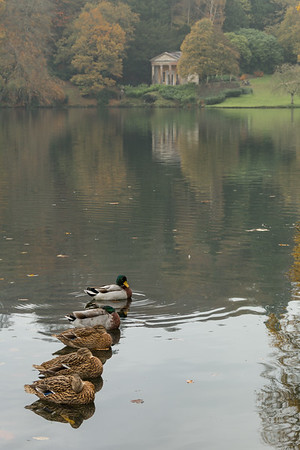 03 All my ducks in a row - Stourbridge