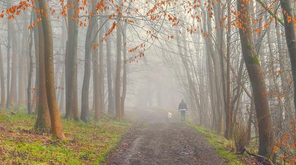 08 - Autumn Mist