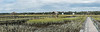 Lachicotte Compant_Pawleys Island_6196