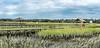 Lachicotte Compant_Pawleys Island_6193