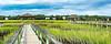 Lachicotte Compant_Pawleys Island_6205