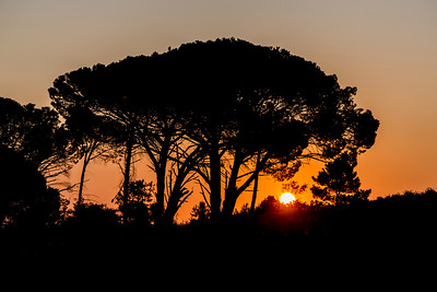 Silhouette of a tree with sunset