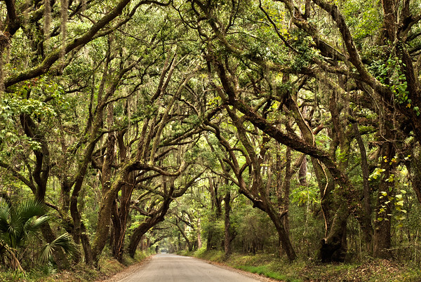 Botany Bay Entrance, Edisto Island, South Carolina