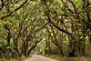 Botany Bay Entrance, Edisto Island, South Carolina