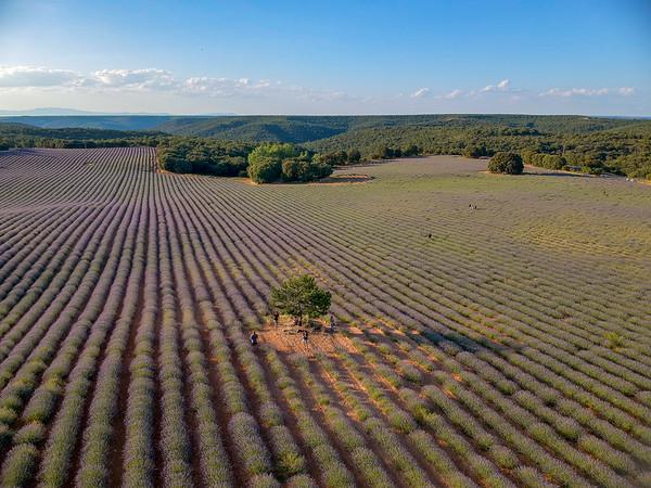lavender & sunflower fields in Brihuega - Spain