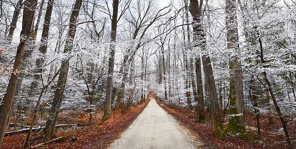 Snow Covered Trees in Cedarville State Forest, Maryland