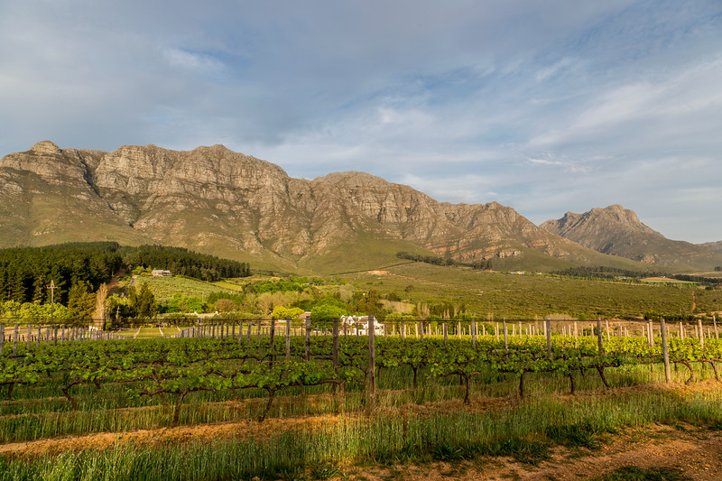 Stellenbosch Mountain with Vineyard in Foreground