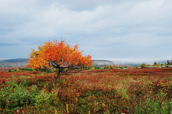 Autumn in the Dolly Sods Wilderness, West Virginia