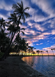 """Reach""  Coco palms reaching for evening's last light at Anaehoomalu Bay. Hawaii Island."