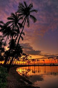 """Anaehoomalu Palms""  Big Island Hawaii."