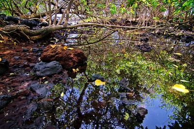 Coastal stream at Kaloko Ponds. Big Island Hawaii, April 2012.