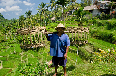 """Rice Farmer"" Bali, Indonesia. September 2012."