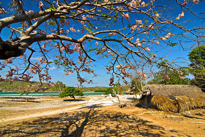 """Flower Tree""  Rote Island, Indonesia. September 2012."