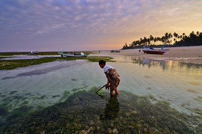 """Seaweed Collector""  Rote Island, Indonesia. September 2012."